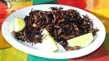 A plate of tasty grasshoppers at Guelaguetza Restaurant