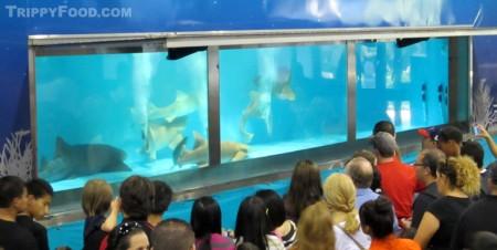 The new Shark Encounter exhibit features 4 nurse sharks and a lemon shark