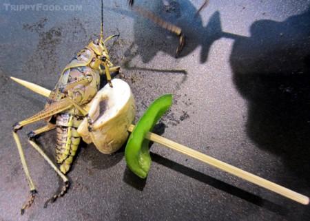 A lubber grasshopper skewer
